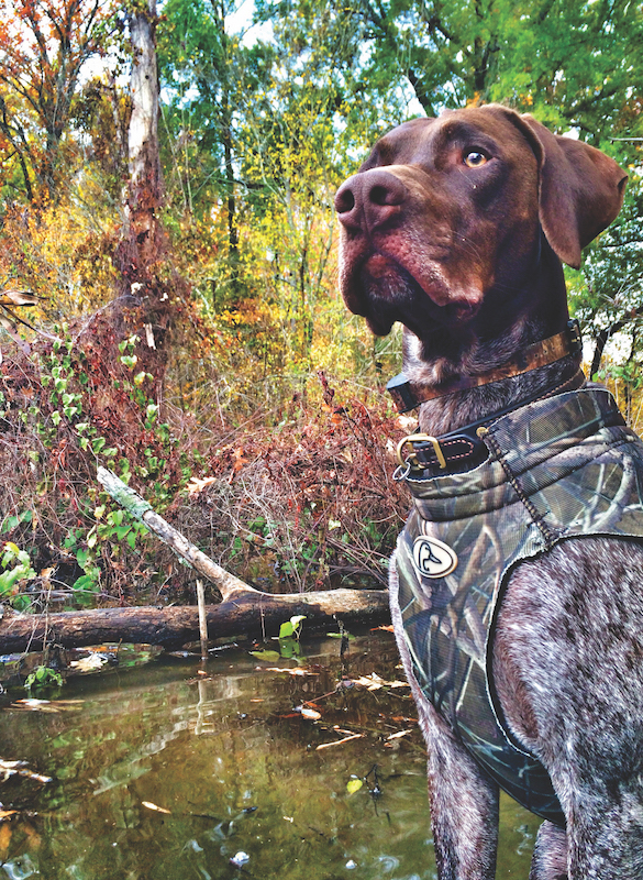 2nd Place Mention: Pilot, a German Shorthaired Pointer, submitted by Allyson Burgess of Greenville