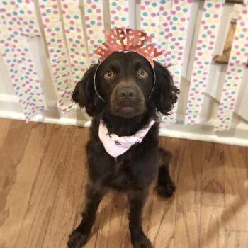 Birthday Pawty