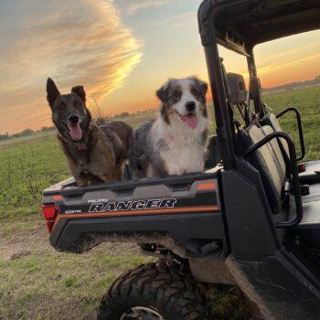 Polaris Pups