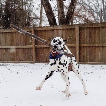 Delta Snow Day