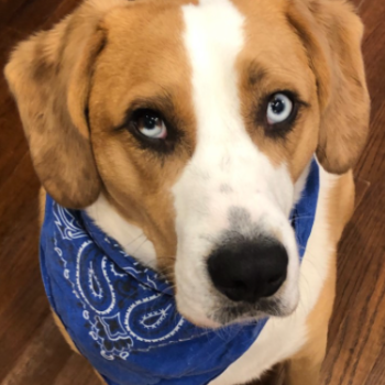 Mom, doesn't my bandana look good in the Delta, with my baby blues?!