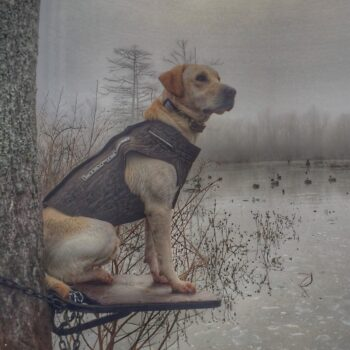 Waiting on the fog
