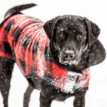 Snow Day for Hallie Jack