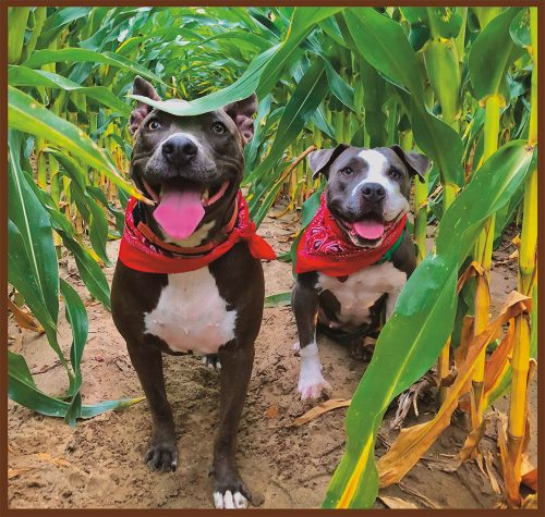 1st Place: Billie Holiday and Willie Mae, Mixed Breeds, submitted by Brooke Atwood of Clarksdale