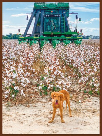 3rd Place: Finley, Golden Retriever, submitted by Ann Granville Heaton of Clarksdale