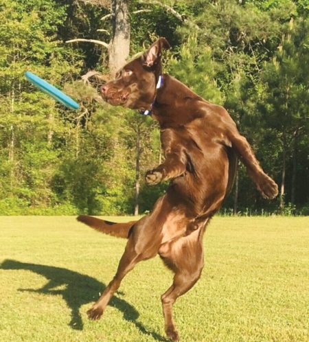 Dogs at Play 1st Place – Jax