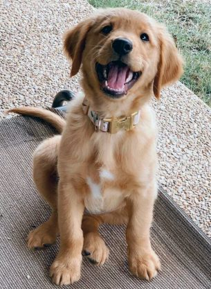 Puppies 2nd Place – Dolly Pawton