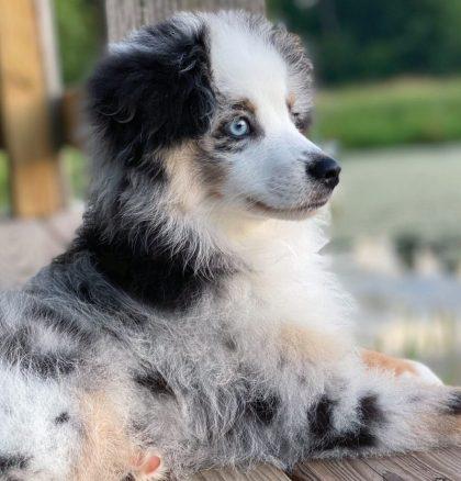 Puppies 3rd Place – Indigo